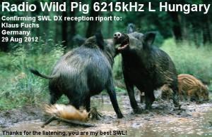 radiowildpig-broadcastqslcard-klaus