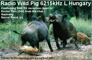 radiowildpig-broadcastqslcard-doc